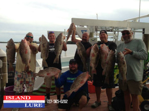 The Day's Catch - Capt. Marciano, son Joe and the Crew of Stiff Competition of island Lure Fishing Adventures Tampa St. Pete Folorida