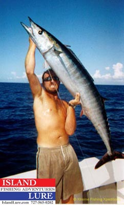 Kingfish deep sea fishing charters tampa st petersburg for Fishing st pete beach