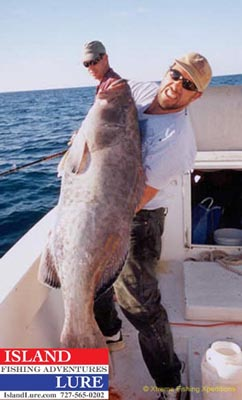 Grouper deep sea fishing charters fishing charters st for Deep sea fishing sarasota fl