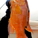 Fishing charters St. pete Florida
