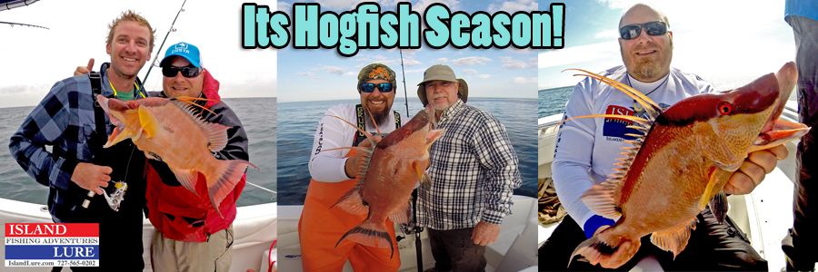 Hogfish Charters Tampa Bay FL - Deep Sea Fishing St. Petersburg