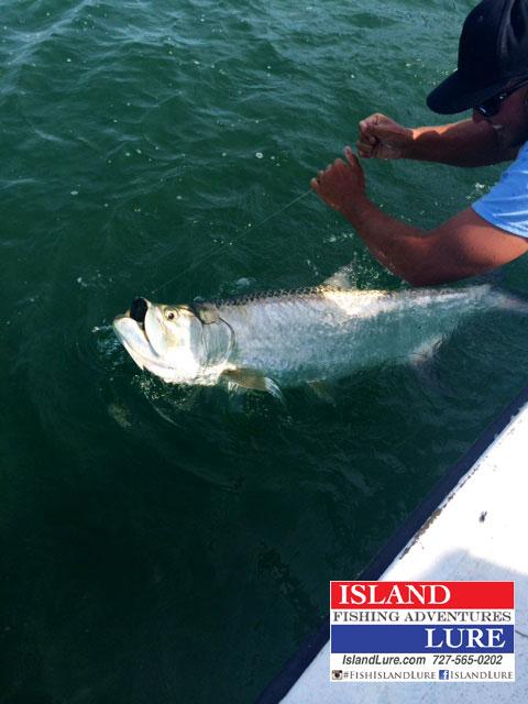Tarpon fishing charters fishing charters st pete beach for Tampa deep sea fishing