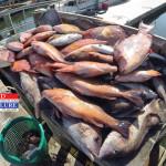 Killshot from Deep Sea Trip on March 15th 2014