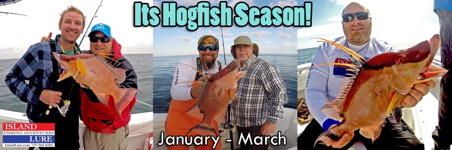 Hogfish Deep Sea Fishing Charters St. Petersburg, FL and Tampa Bay!