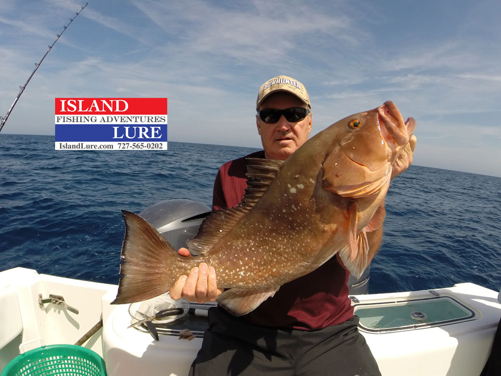 Grouper deep sea fishing charters fishing charters st for Fishing charters clearwater fl